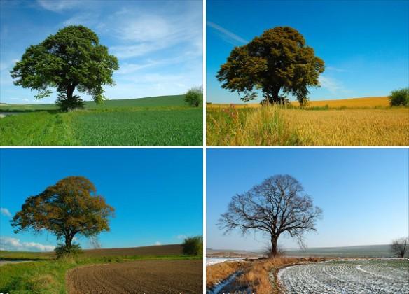 estacionalidad-casa-rural