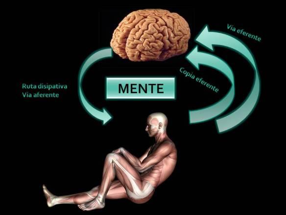 cuerpo-y-cerebro
